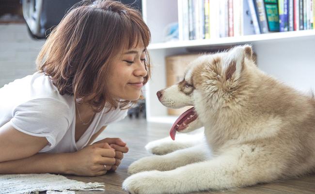 Les maladies transmises à l'homme par le chien
