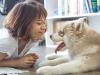 3 maladies que les chiens peuvent transmettre à l'homme