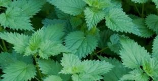Les E.P.S. ou Extraits de Plantes Standardisées : le pouvoir des plantes